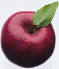 If an Apple a day keeps the doctor away, then Applegate Insulation helps keep the house doctor away